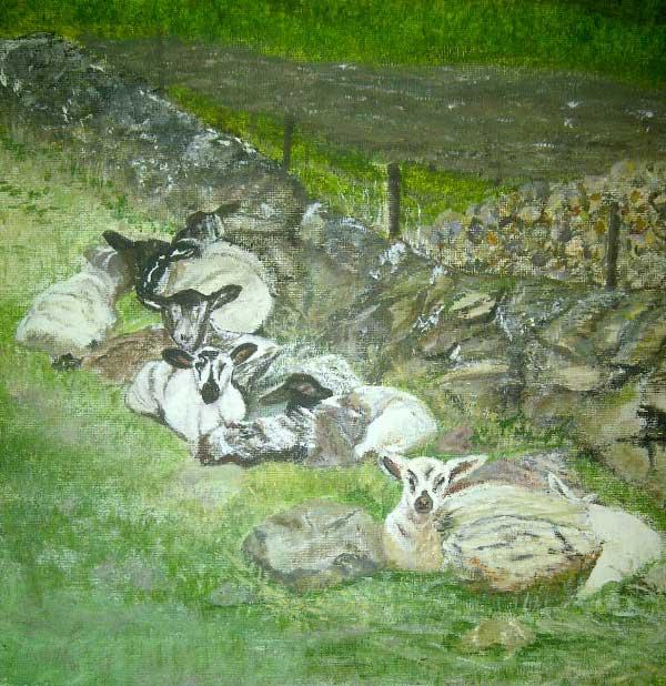 Sheltering Spring Lambs - Glenisla
