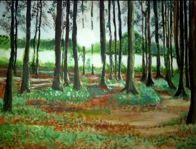 Woodland at Logie Estate